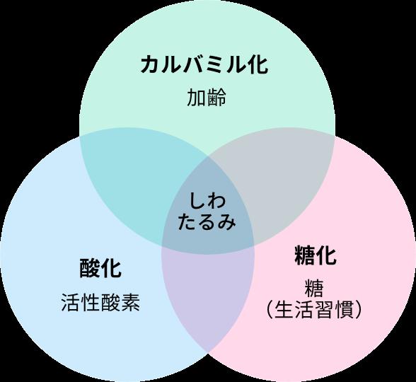カルバミル化 説明グラフ01