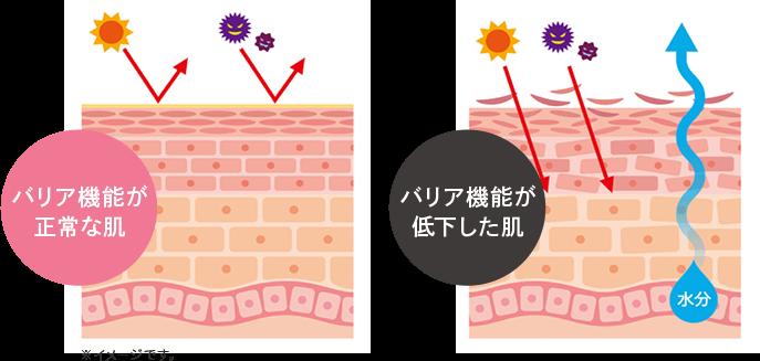 バリア機能が正常な肌と低下した肌のイメージ図